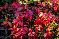 2015.10.24 - End of autumn in the back garden
